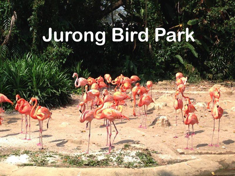 \Jurong Bird Park\